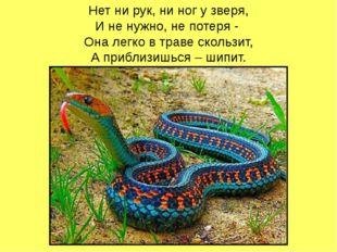 Нет ни рук, ни ног у зверя, И не нужно, не потеря - Она легко в траве скольз