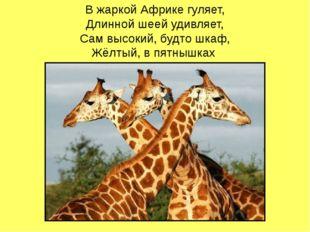 В жаркой Африке гуляет, Длинной шеей удивляет, Сам высокий, будто шкаф, Жёлты