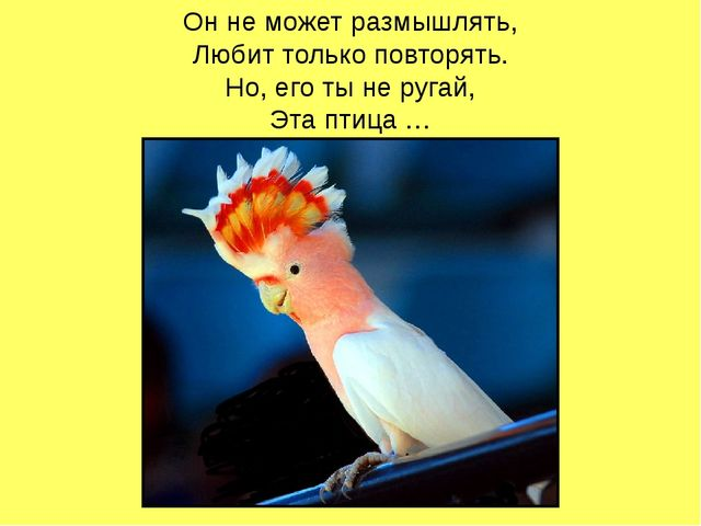 Он не может размышлять, Любит только повторять. Но, его ты не ругай, Эта птиц...