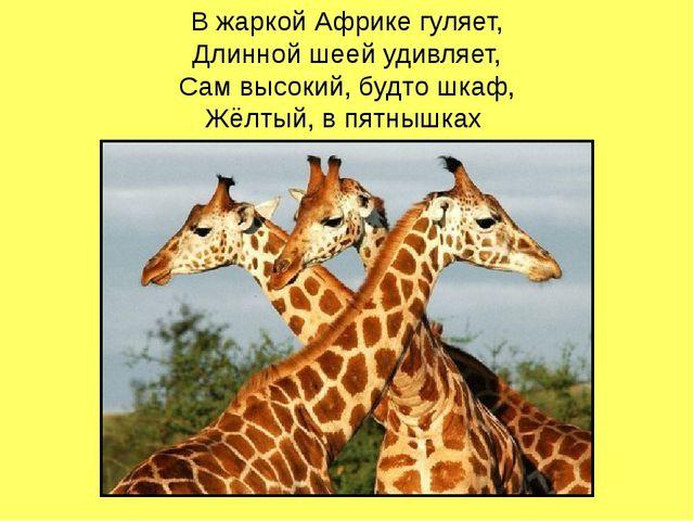 В жаркой Африке гуляет, Длинной шеей удивляет, Сам высокий, будто шкаф, Жёлты...