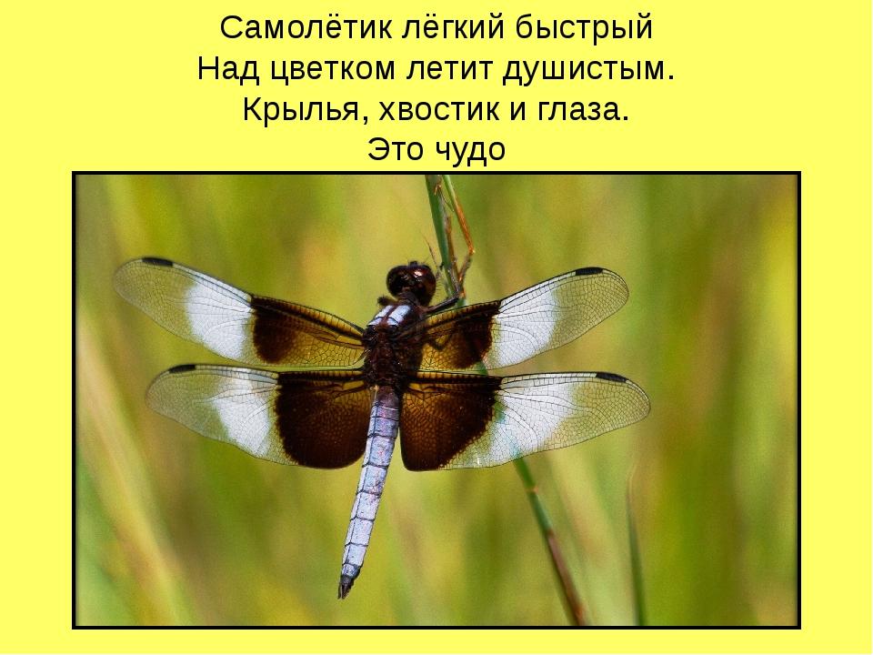 Самолётик лёгкий быстрый Над цветком летит душистым. Крылья, хвостик и глаза....