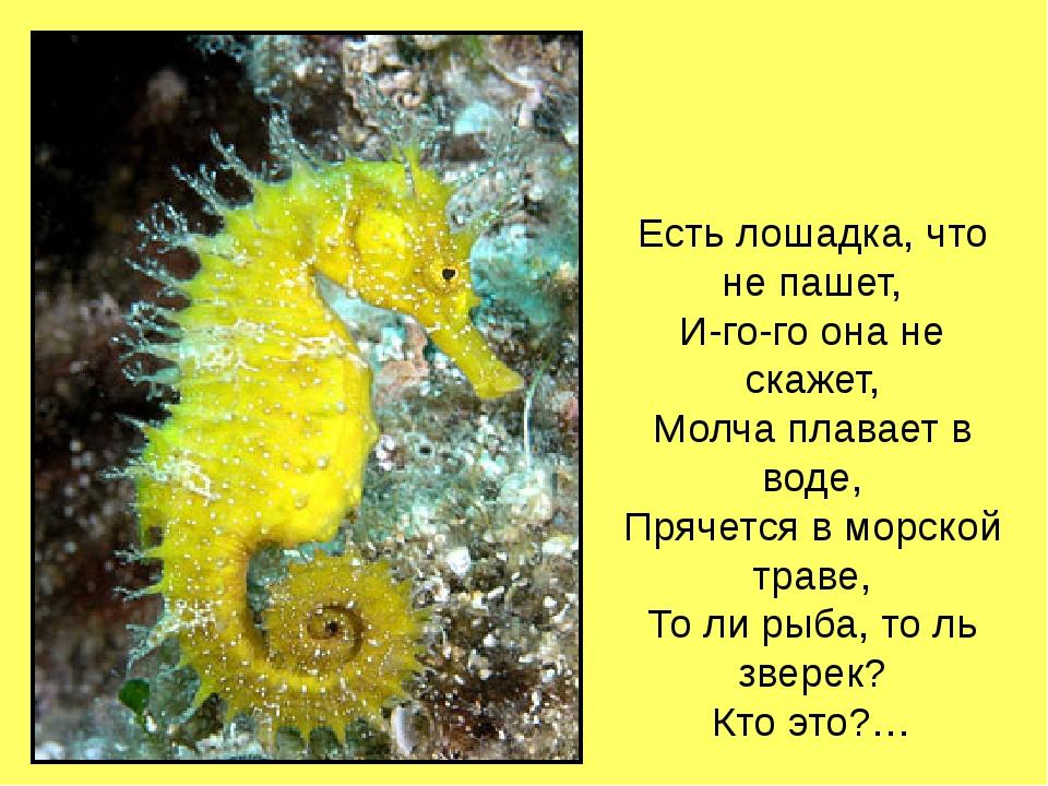 Есть лошадка, что не пашет, И-го-го она не скажет, Молча плавает в воде, Пряч...