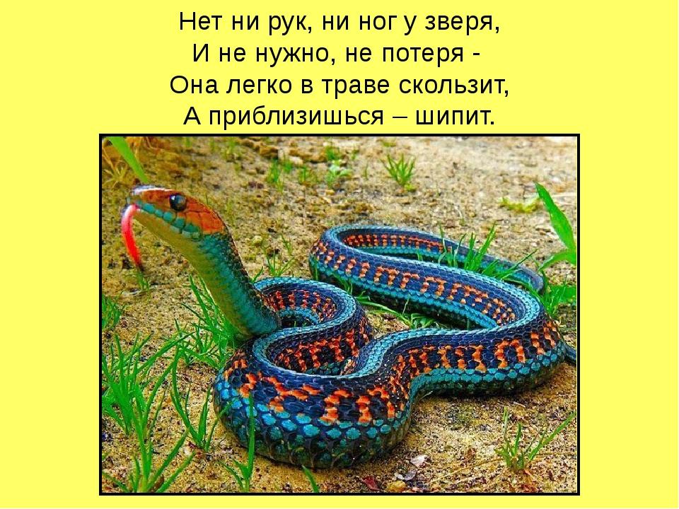 Нет ни рук, ни ног у зверя, И не нужно, не потеря - Она легко в траве скольз...