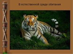 В естественной среде обитания FokinaLida.75@mail.ru