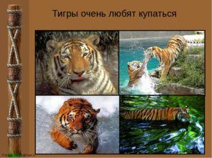 Тигры очень любят купаться FokinaLida.75@mail.ru