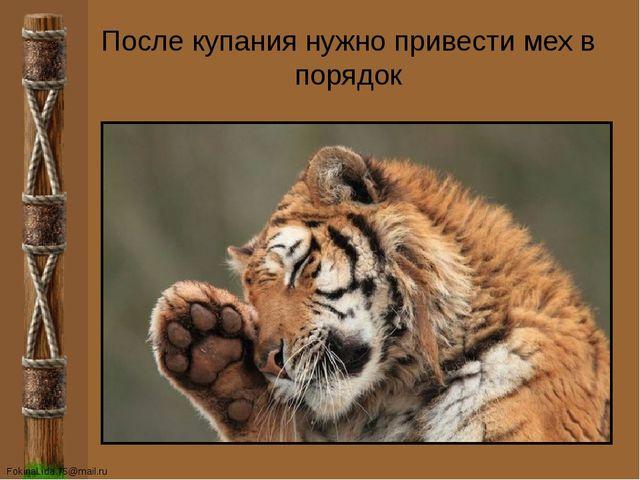 После купания нужно привести мех в порядок FokinaLida.75@mail.ru