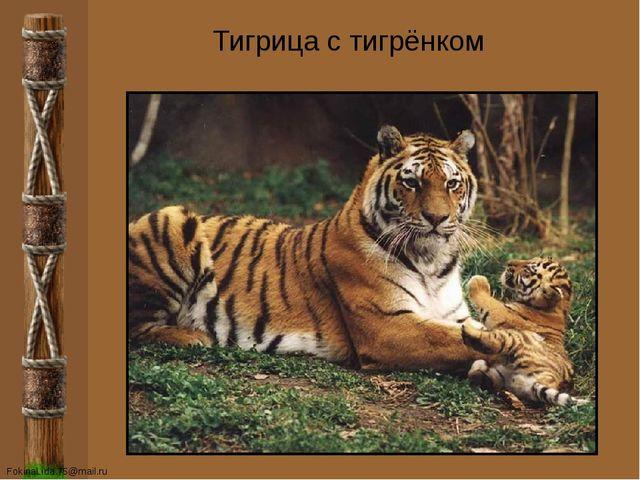 Тигрица с тигрёнком FokinaLida.75@mail.ru