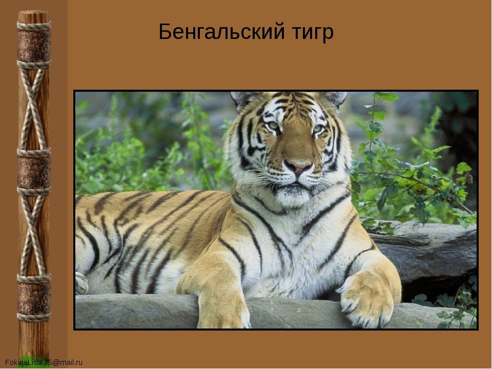 Бенгальский тигр FokinaLida.75@mail.ru