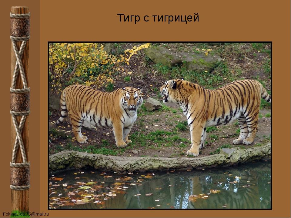 Тигр с тигрицей FokinaLida.75@mail.ru