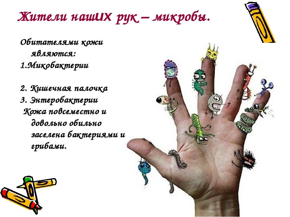 Жители наших рук – микробы. Обитателями кожи являются: 1.Микобактерии 2. Кише...