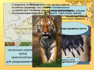 Хищники - животные полностью или частично питающиеся млекопитающими и птицам