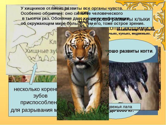 Хищники - животные полностью или частично питающиеся млекопитающими и птицам...