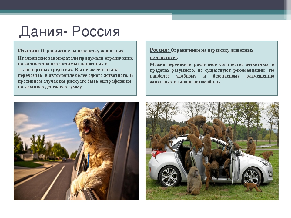 Дания- Россия Италия: Ограничение на перевозку животных Итальянские законодат...