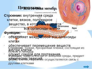 Ядро Строение: двухслойная ядерная мембрана, содержащая крупные поры; ядерный