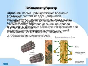 Пластиды Строение: органоиды, эукариотических растений и некоторых фотосинте