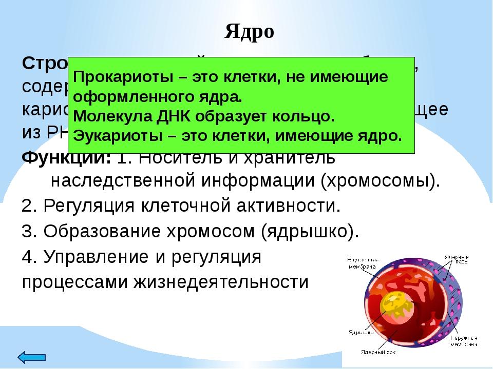 Эндоплазматическая сеть (ЭПС) Строение: система мембран, образующих канальца,...