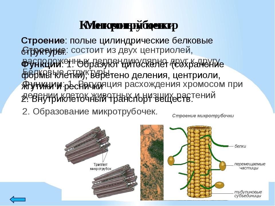 Пластиды Строение: органоиды, эукариотических растений и некоторых фотосинте...