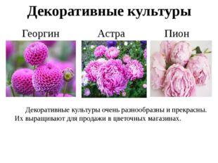 Декоративные культуры Астра Георгин Пион Декоративные культуры очень разнооб