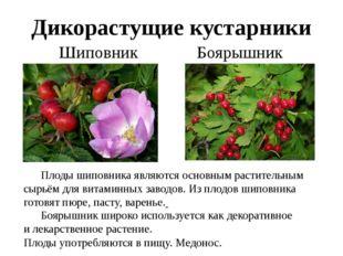 Дикорастущие кустарники Шиповник Боярышник Плоды шиповника являются основным