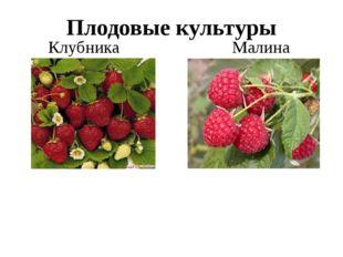 Плодовые культуры Клубника Малина