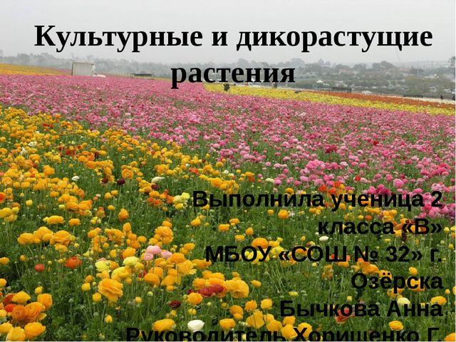 Культурные и дикорастущие растения Выполнила ученица 2 класса «В» МБОУ «СОШ №...