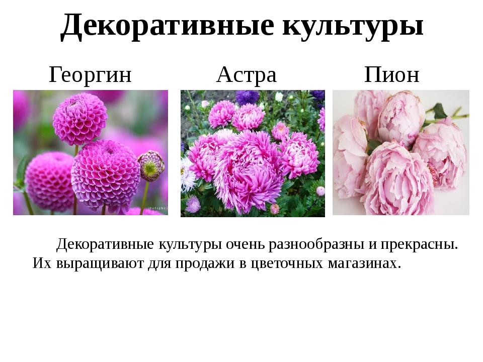 Декоративные культуры Астра Георгин Пион Декоративные культуры очень разнооб...