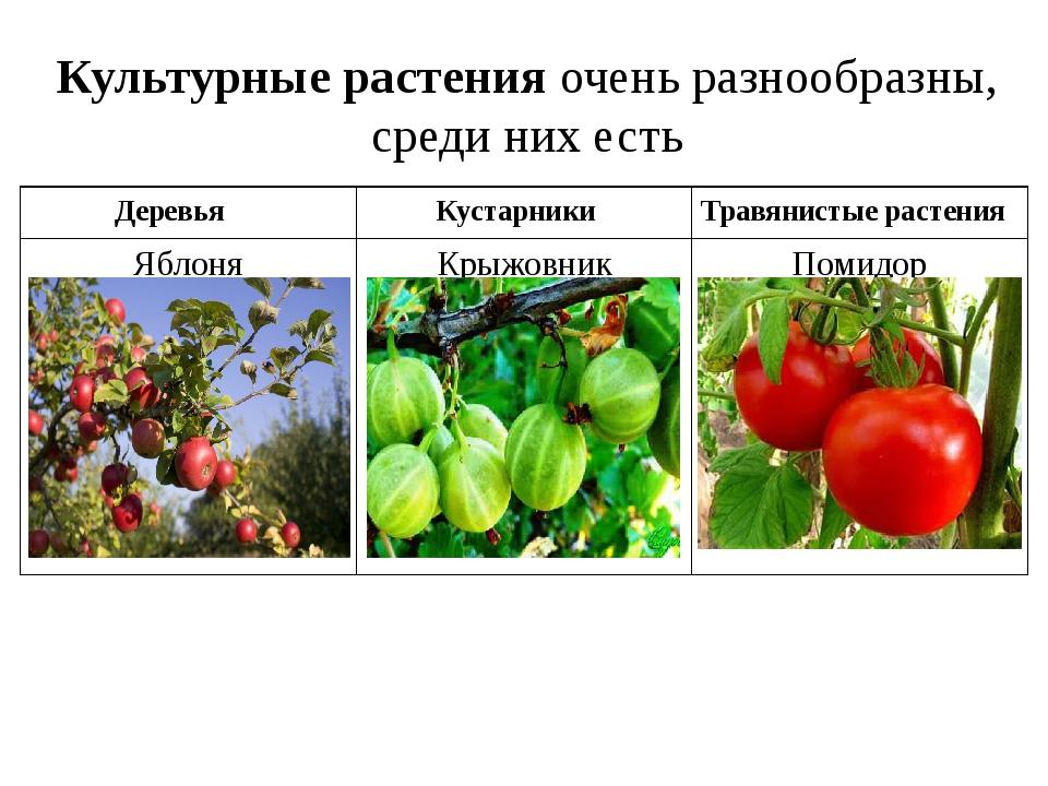Культурные растения очень разнообразны, среди них есть Деревья Кустарники Тра...