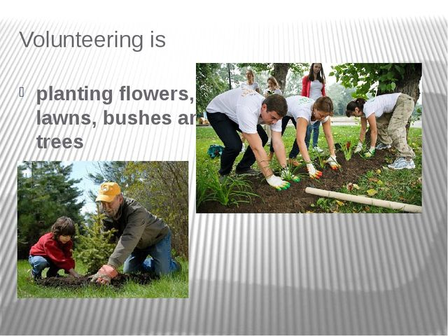 Volunteering is planting flowers, lawns, bushes and trees