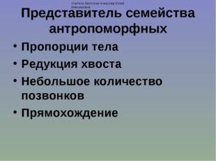 Представитель семейства антропоморфных Пропорции тела Редукция хвоста Небольш