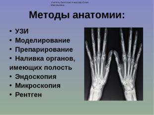 Методы анатомии: УЗИ Моделирование Препарирование Наливка органов, имеющих по