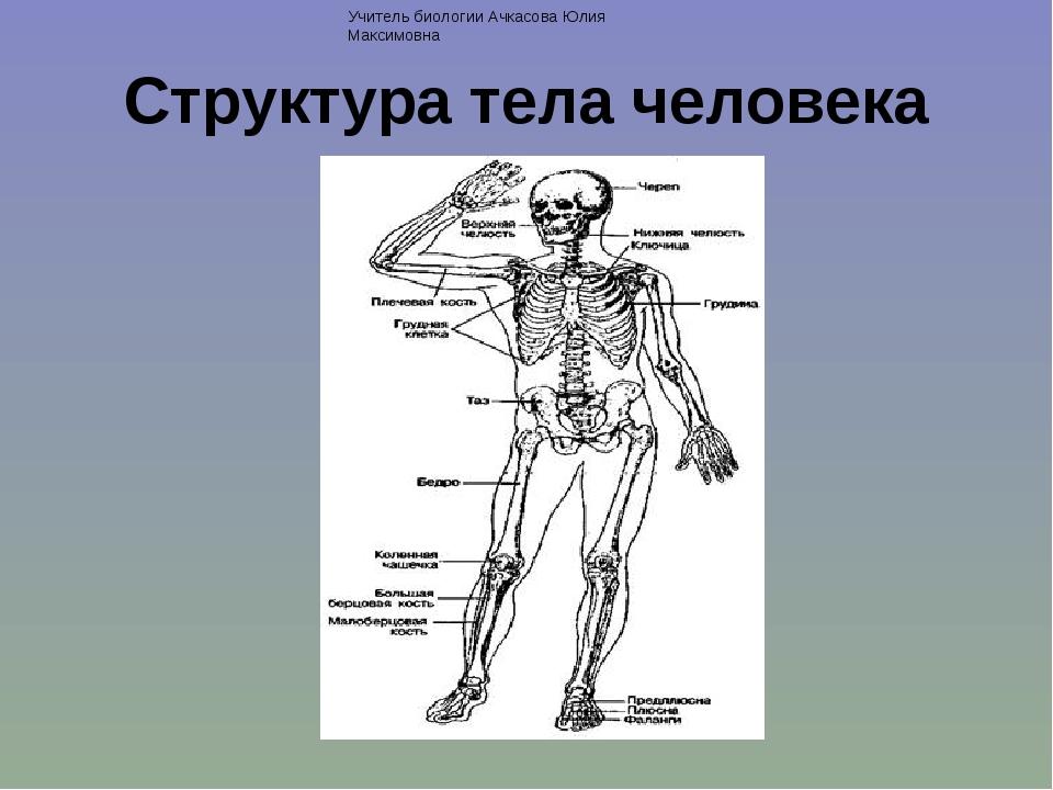 Структура тела человека Учитель биологии Ачкасова Юлия Максимовна