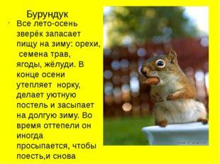 Бурундук Все лето-осень зверёк запасает пищу на зиму: орехи, семена трав, яго