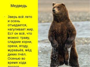Медведь Зверь всё лето и осень отъедается, нагуливает жир. Ест он всё, что мо