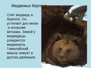 Медвежья берлога Спит медведь в берлоге. Он устилает дно мхом и еловыми ветка