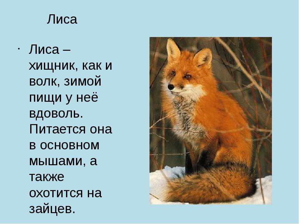 Лиса Лиса – хищник, как и волк, зимой пищи у неё вдоволь. Питается она в осно...