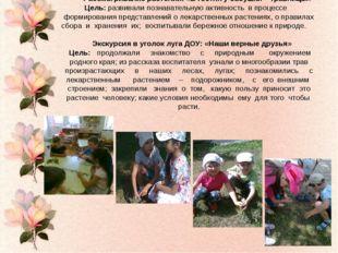 Рассматривание растений: «В гостях у бабушки – травницы» Цель: развивали по