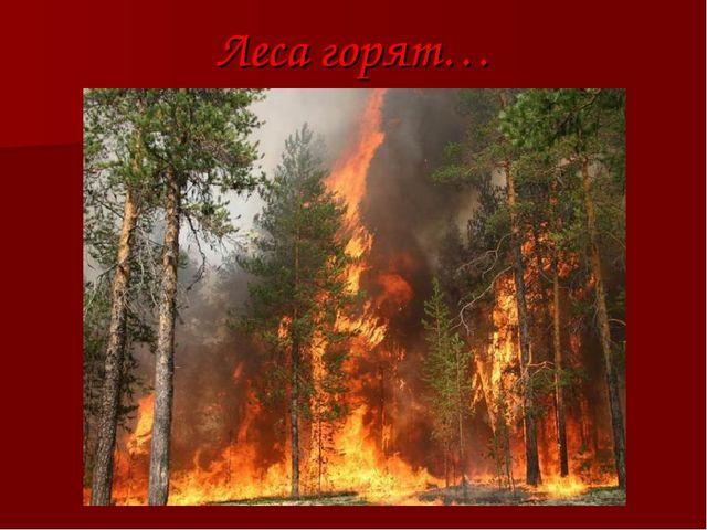 Леса горят…