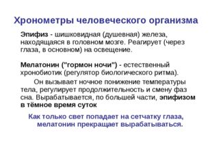 Хронометры человеческого организма Эпифиз- шишковидная (душевная) железа, н