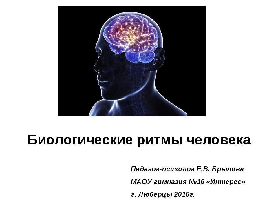 Биологические ритмы человека Педагог-психолог Е.В. Брылова МАОУ гимназия №16...