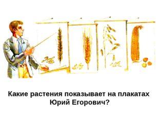 Какие растения показывает на плакатах Юрий Егорович?