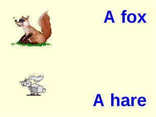A fox A hare
