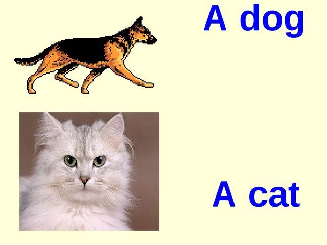 A dog A cat