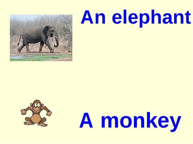An elephant A monkey
