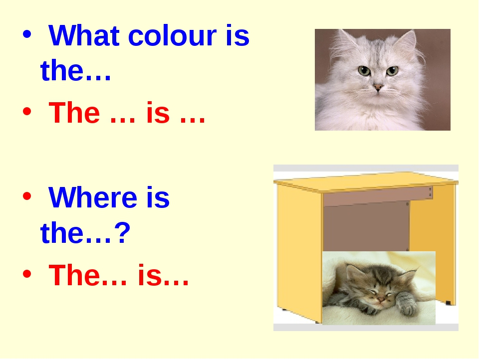 What colour is the… The … is … Where is the…? The… is…