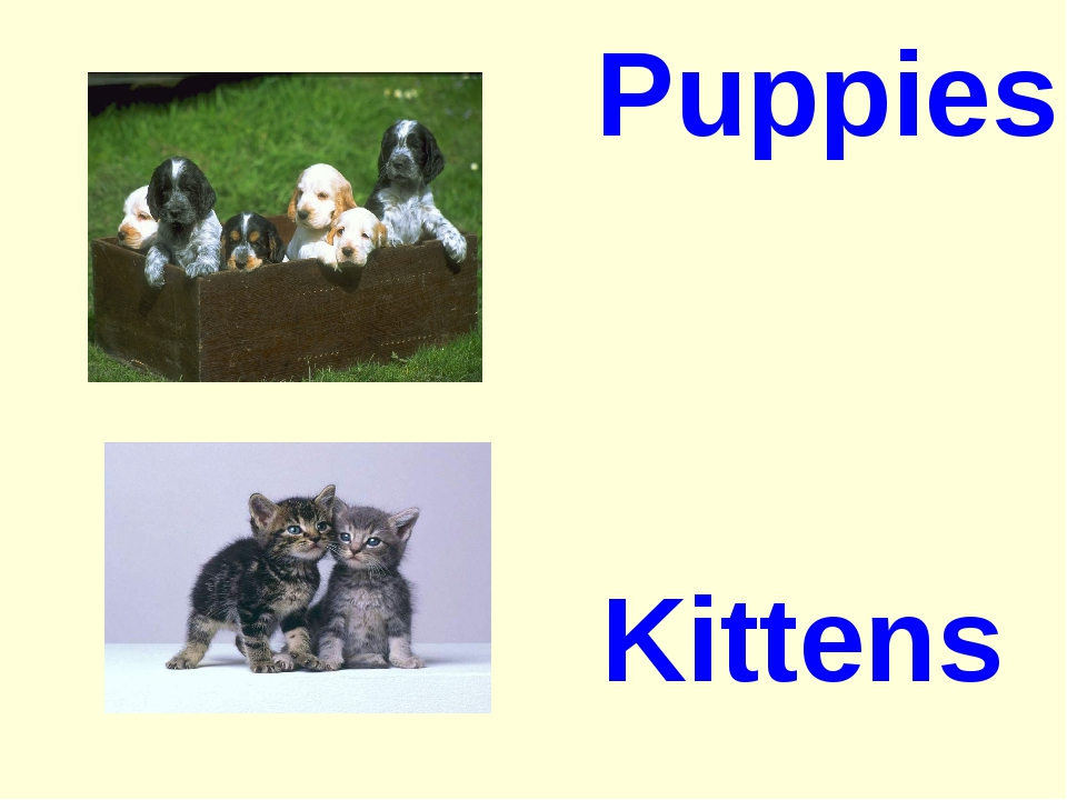 Puppies Kittens