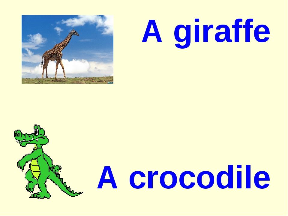 A giraffe A crocodile