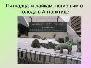 Пятнадцати лайкам, погибшим от голода в Антарктиде