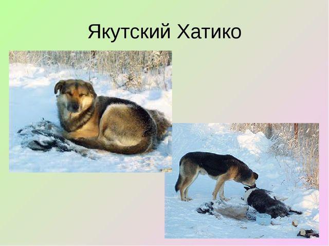 Якутский Хатико