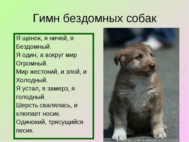 Гимн бездомных собак Я щенок, я ничей, я Бездомный. Я один, а вокруг мир Огро...