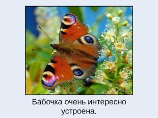Бабочка очень интересно устроена.